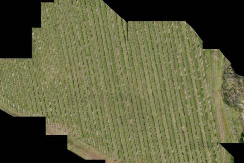 Vineyard monitoring via UAV provides vineyard managers with valuable insights into the health and vigour of their precious grapes. This mosaic of the Frogmore Creek Vineyard was produced using multiple images taken from around 40m above ground level.