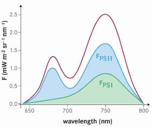 Fluorescence emission with contributions from photosystems I and II (PSI, PSII). The peak at 685 nm mostly originates from PSII, while the peak at 740 nm originates from both PSI and PSII (ESA, 2015).